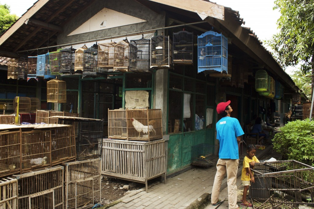 Cages filled with so many beautiful and exotic birds. Elsewhere there were also puppies, kittens and bunny rabbits. Yogyakarta