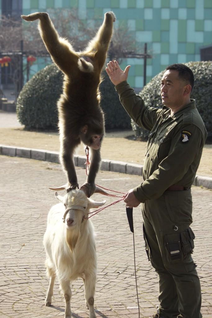 Shanghai Wild Animal Park - 04
