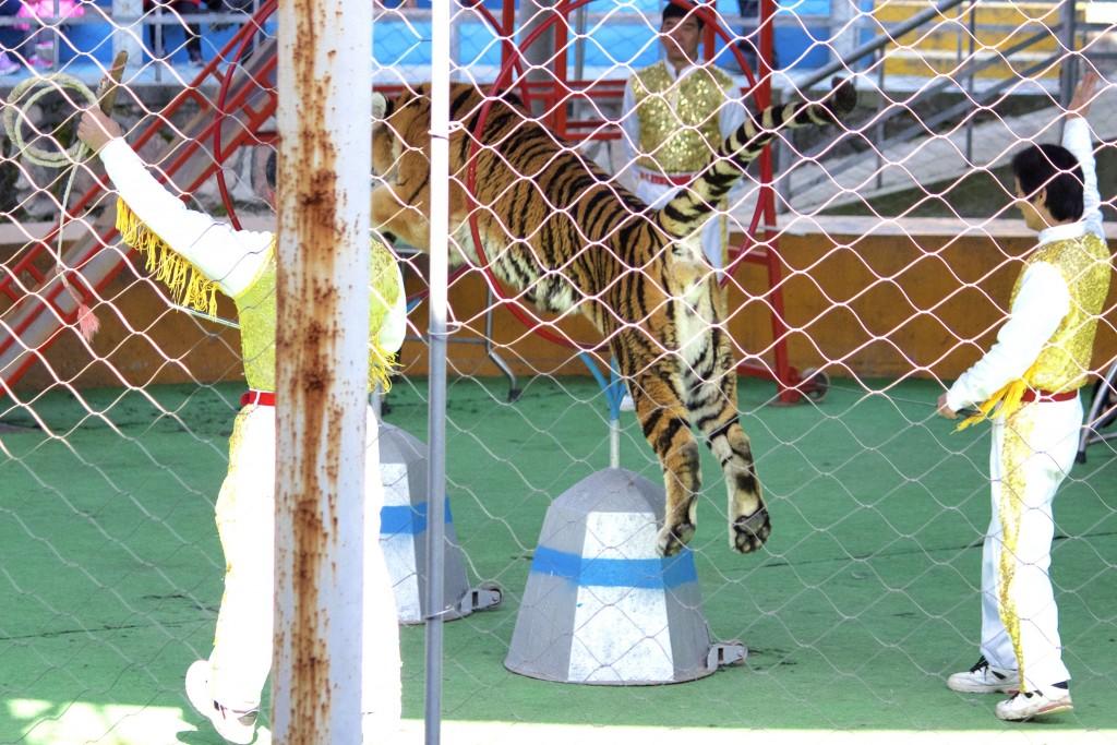 Shanghai Wild Animal Park - 24