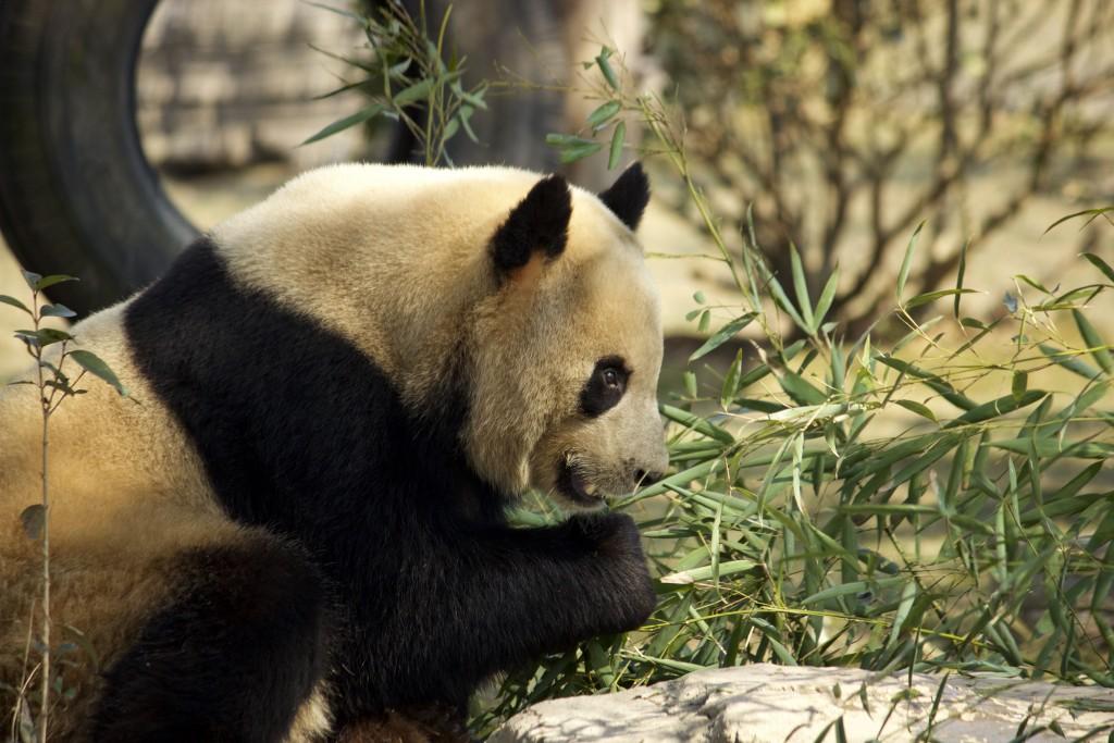 Shanghai Wild Animal Park - 28