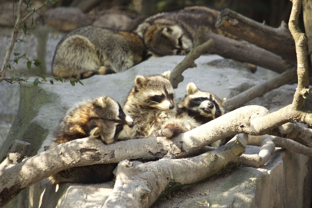 Shanghai Wild Animal Park - 37